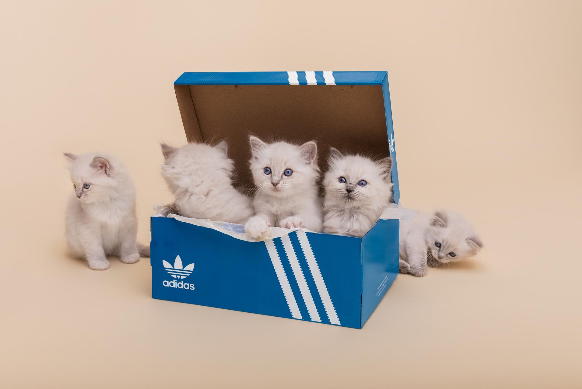 sneakersnstuff adidas I5923 kittens